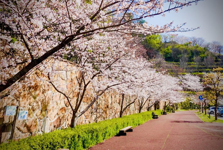 春には桜も咲き誇る