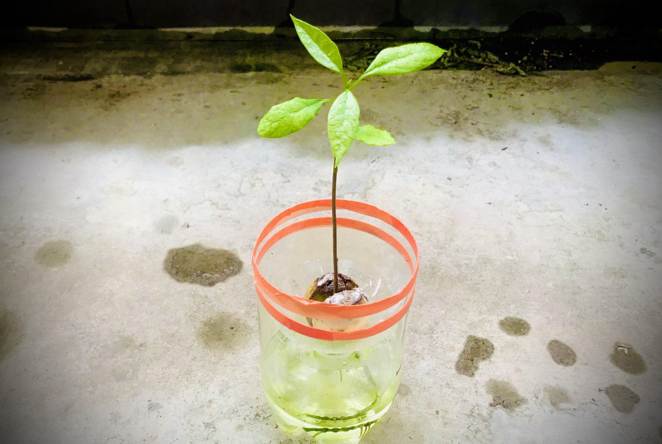 水耕栽培で苔が発生している様子