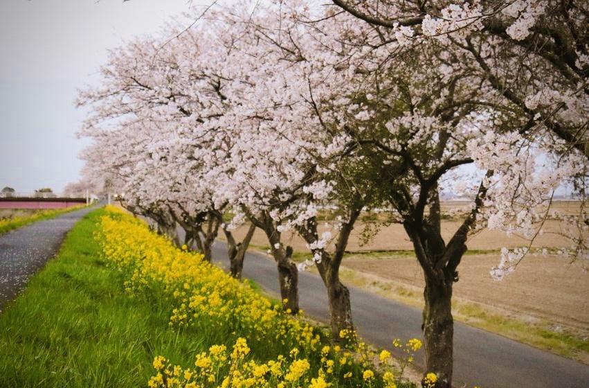 勤行川沿い散策コース