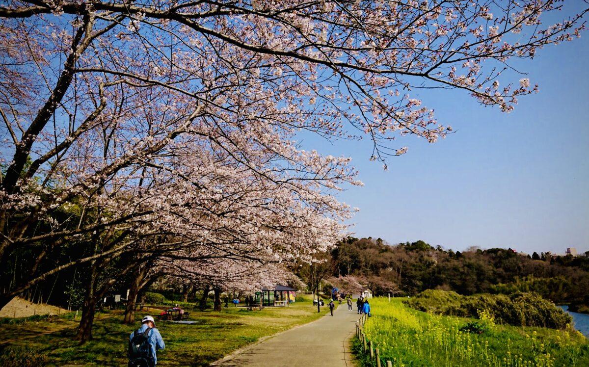 花見川公園